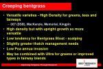 creeping bentgrass6