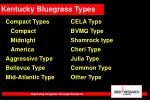 kentucky bluegrass types37