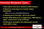 kentucky bluegrass types38