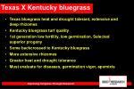 texas x kentucky bluegrass