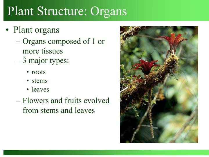 plant structure organs n.
