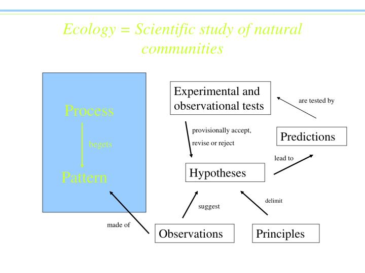 ecology scientific study of natural communities n.