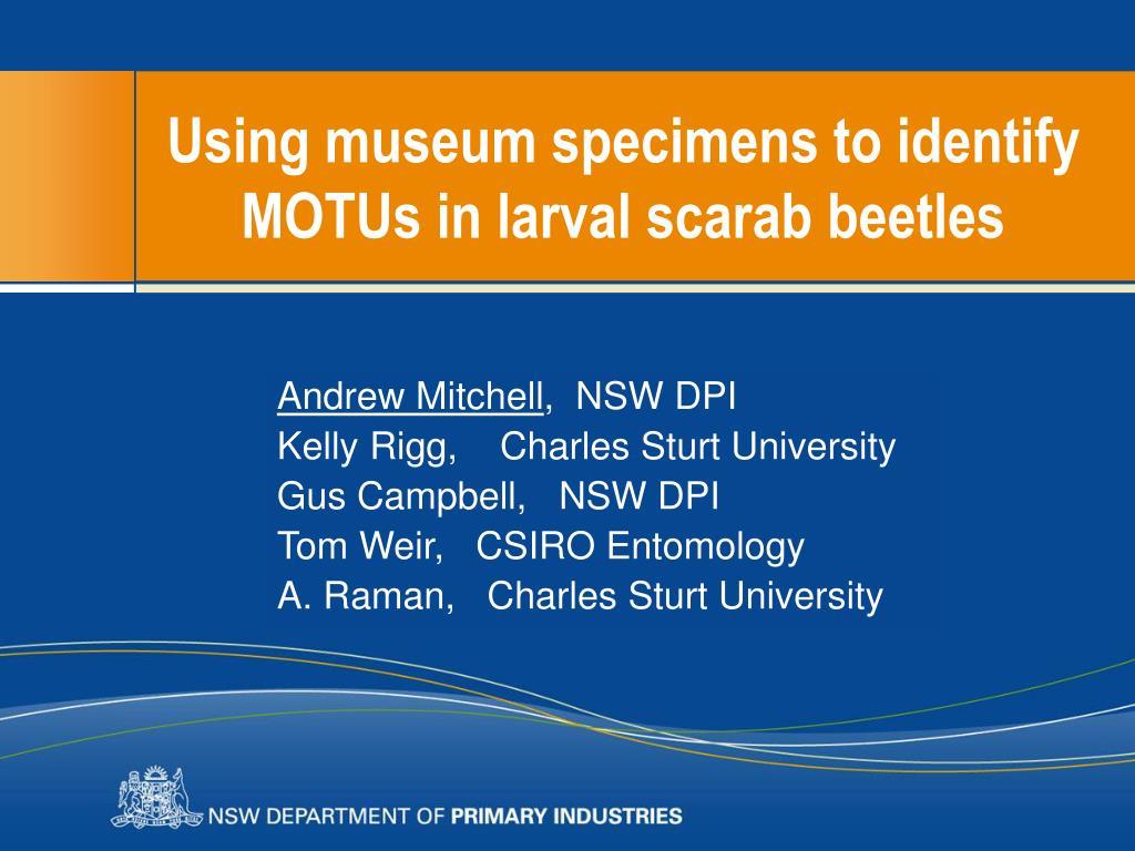 using museum specimens to identify motus in larval scarab beetles l.