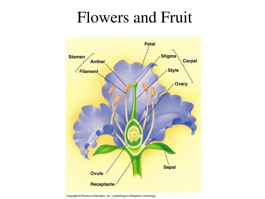flowers and fruit l.