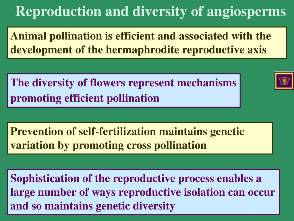 Reproduction and diversity of angiosperms