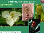 some basic types of flower