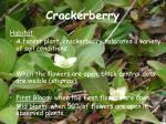 crackerberry21