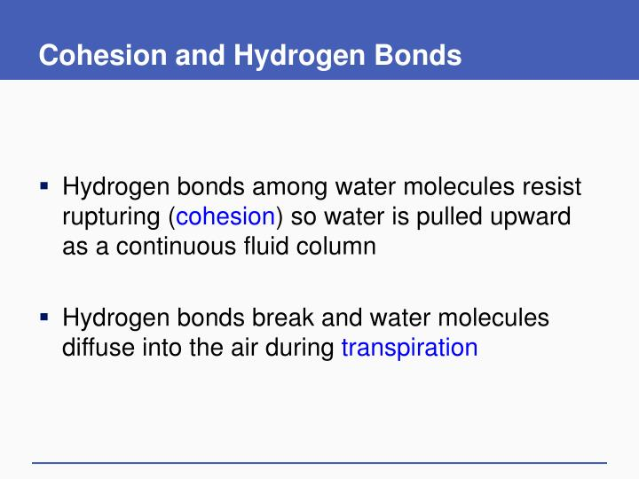 Cohesion and Hydrogen Bonds