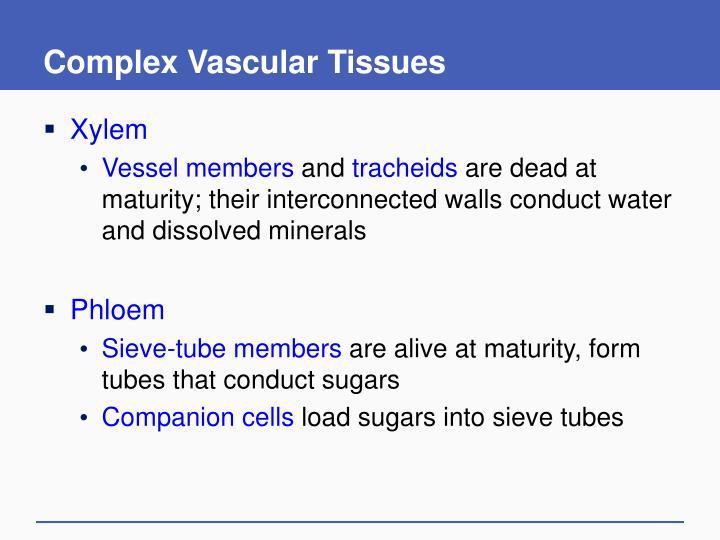 Complex Vascular Tissues