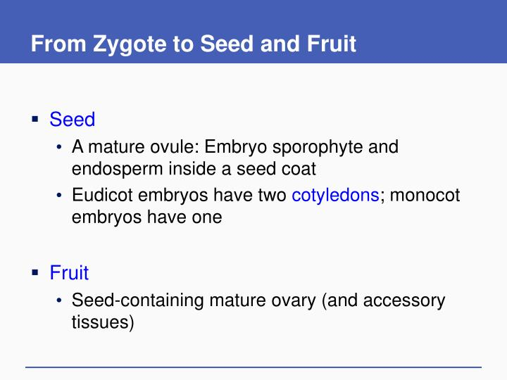 From Zygote to Seed and Fruit