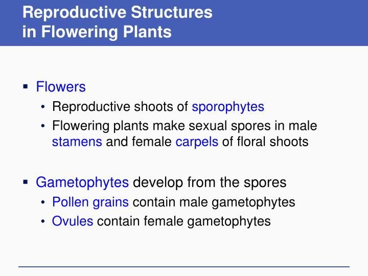 reproductive structures in flowering plants n.