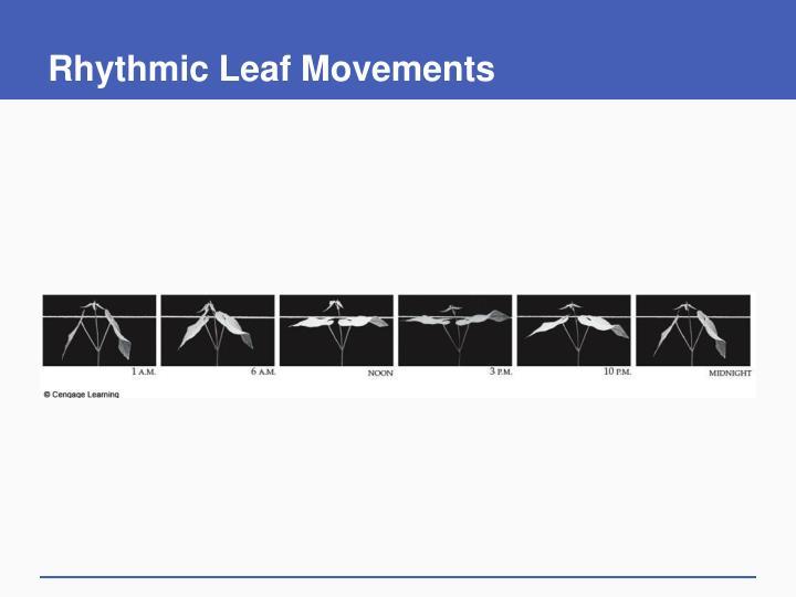 Rhythmic Leaf Movements