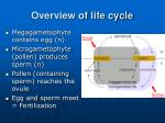 overview of life cycle16