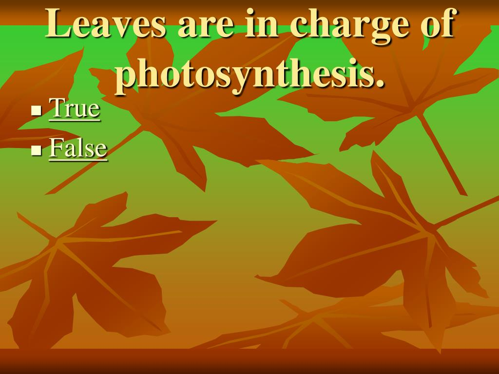 Leaves are in charge of photosynthesis.