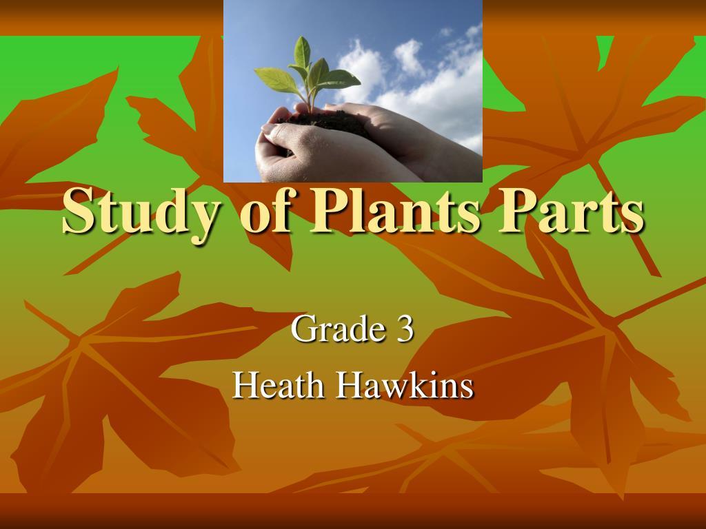study of plants parts l.