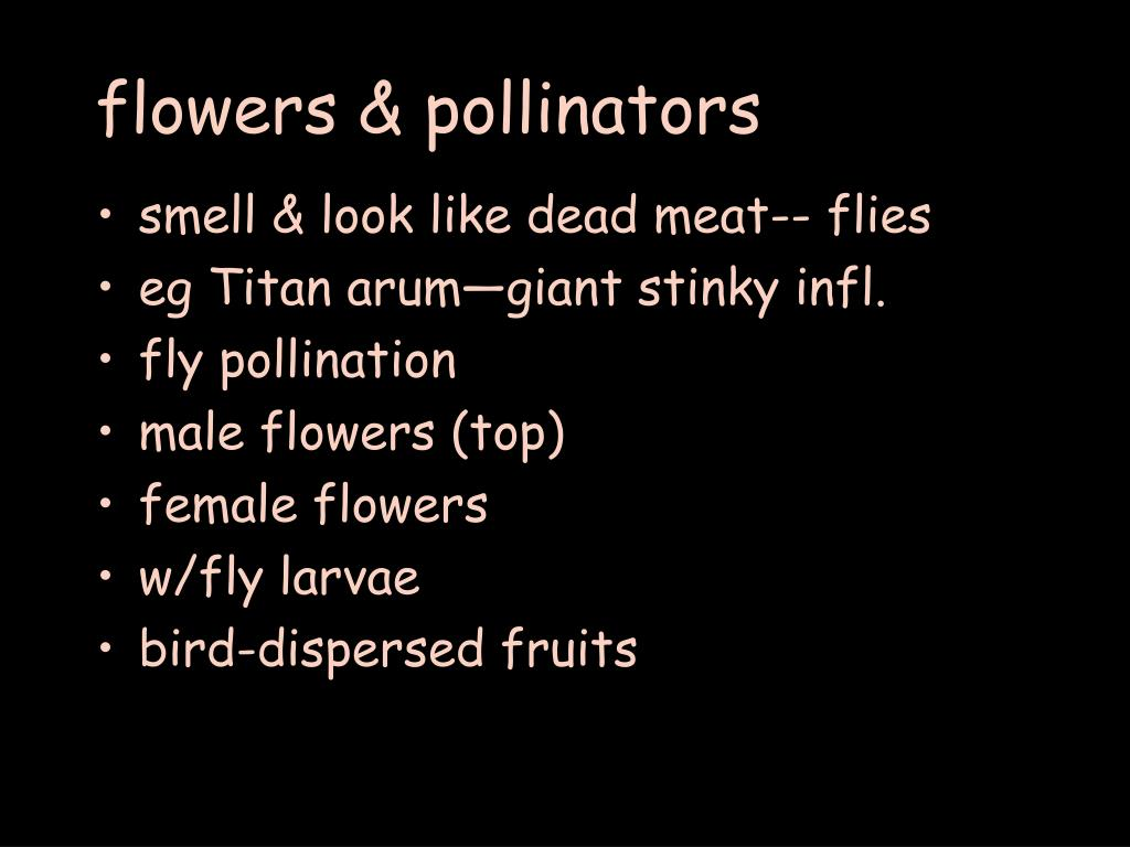 flowers & pollinators