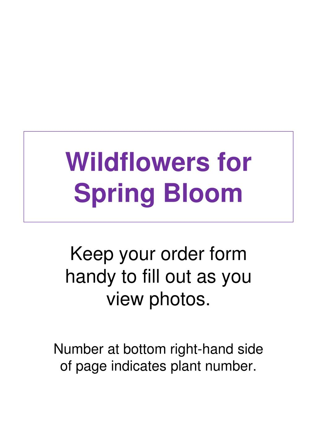 wildflowers for spring bloom l.