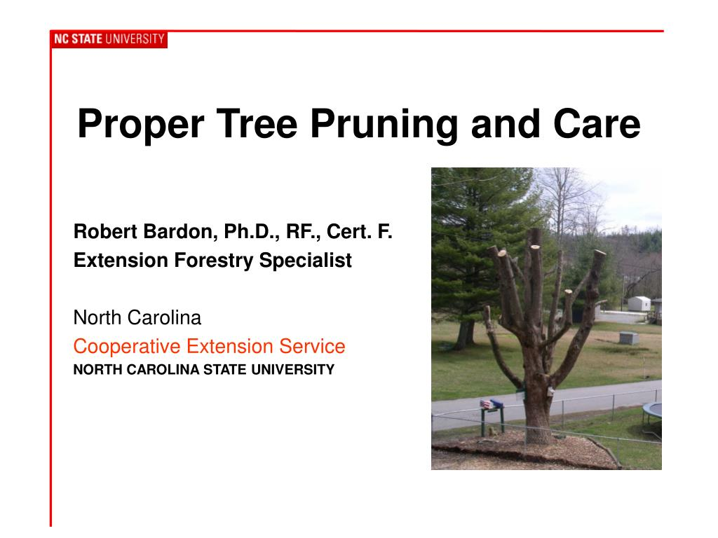 proper tree pruning and care l.