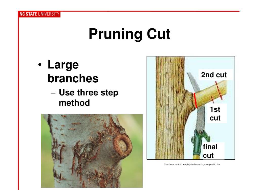 Pruning Cut
