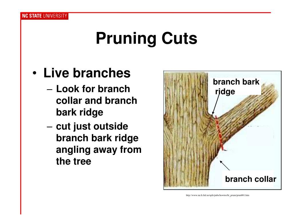 Pruning Cuts