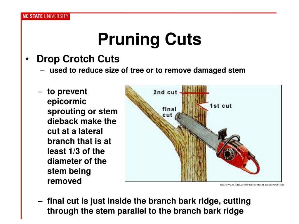 Drop Crotch Cuts