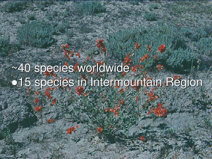 40 species worldwide 15 species in intermountain region