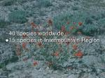 40 species worldwide 15 species in intermountain region