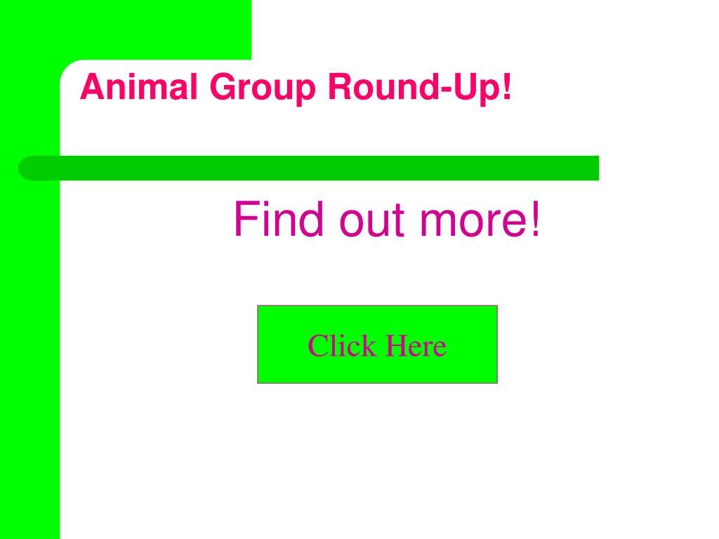 Animal Group Round-Up!
