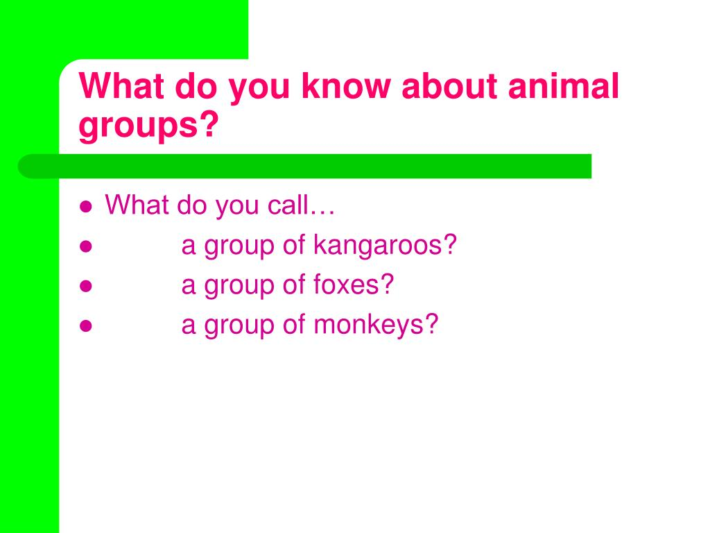 What do you know about animal groups?