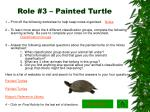 role 3 painted turtle