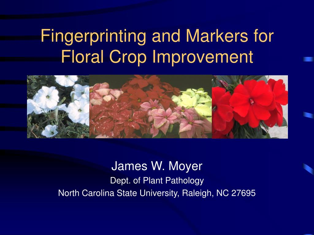 fingerprinting and markers for floral crop improvement l.