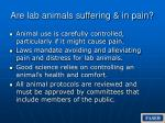 are lab animals suffering in pain