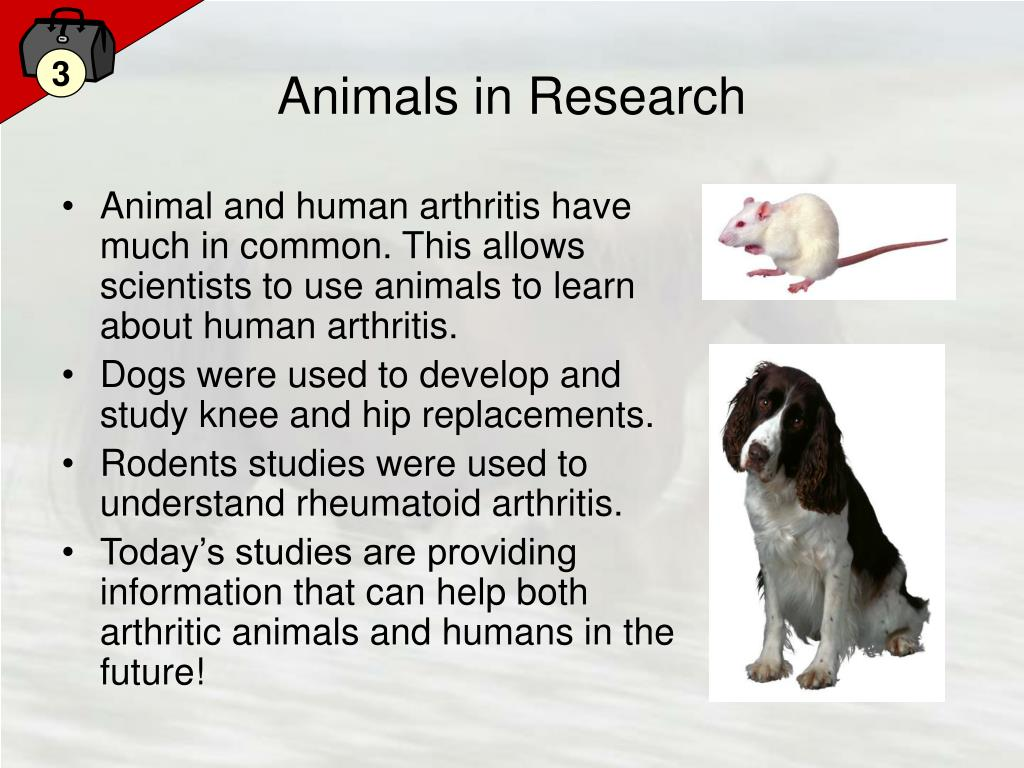 Animals in Research