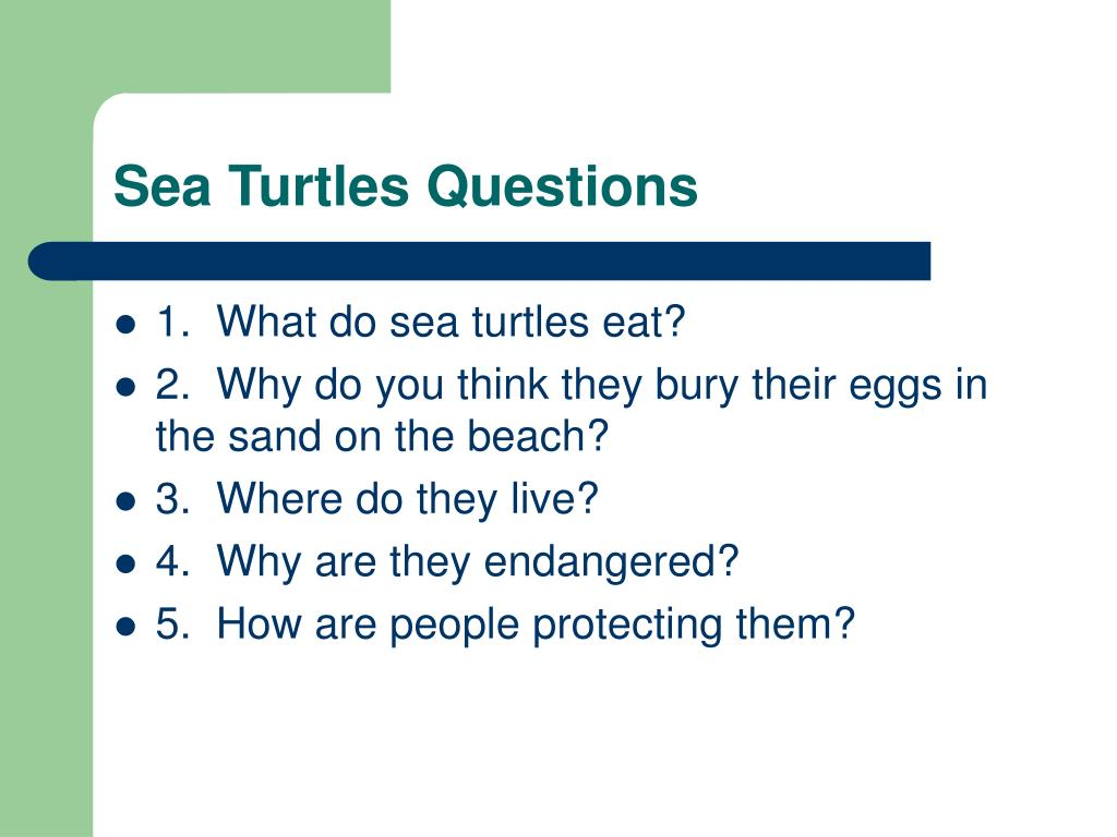 Sea Turtles Questions