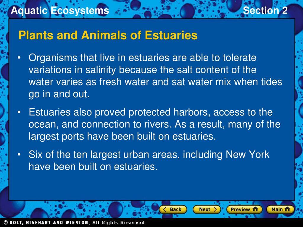 Plants and Animals of Estuaries