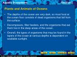 plants and animals of oceans22