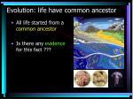 evolution life have common ancestor