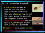 is life created or evolved