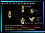 result of the fruit fly experiment