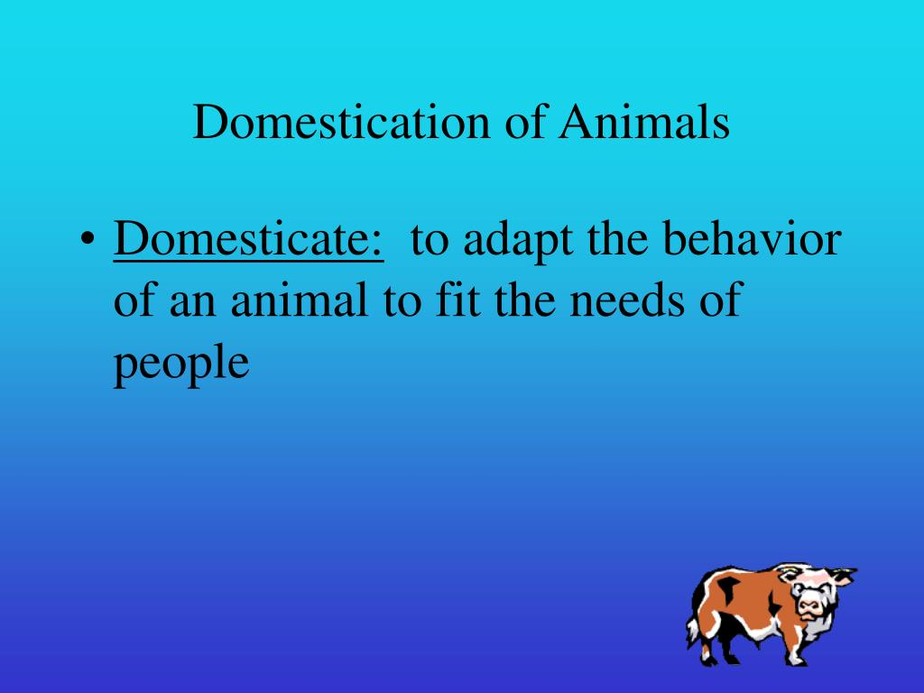 domestication of animals l.