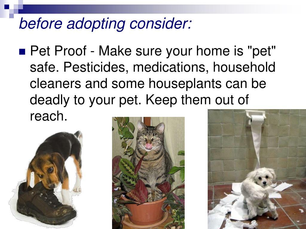 before adopting consider: