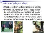 before adopting consider47