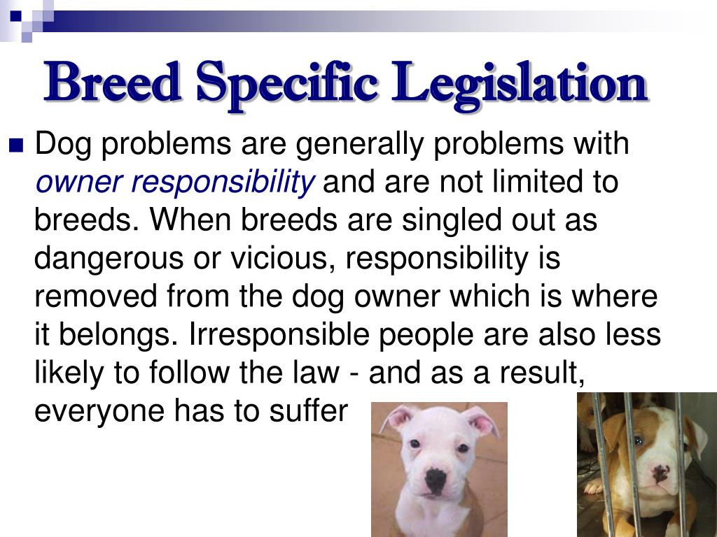 Breed Specific Legislation