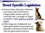 breed specific legislation71