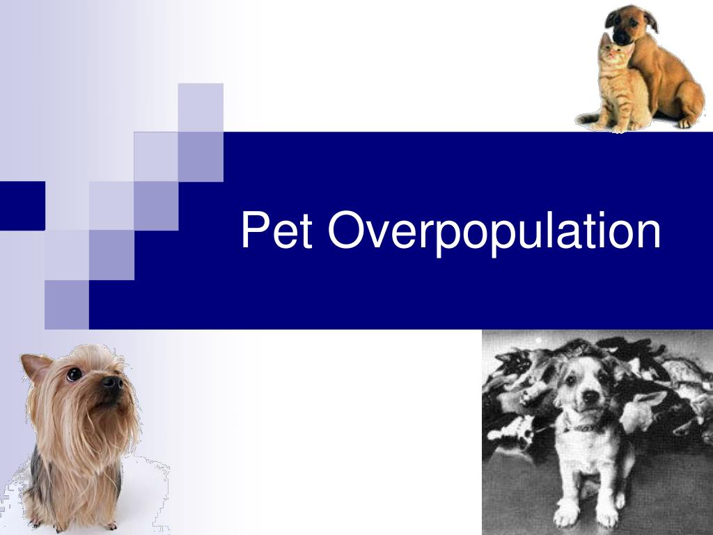 Pet Overpopulation