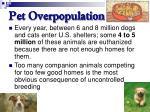 pet overpopulation61
