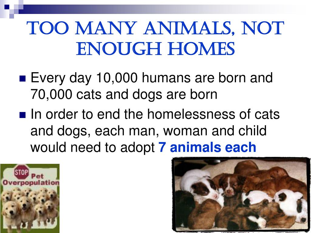 Too many animals, not enough homes