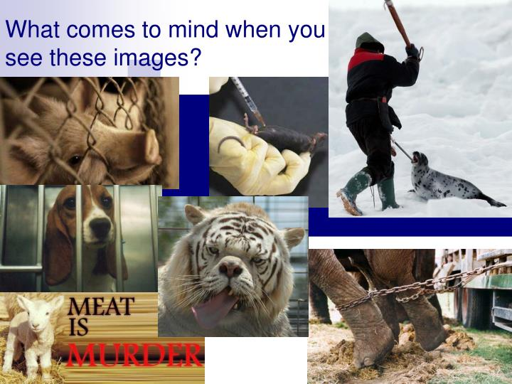 What comes to mind when you see these images