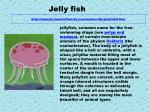 http animals howstuffworks com marine life jellyfish2 htm