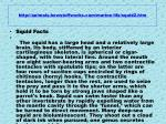 http animals howstuffworks com marine life squid2 htm